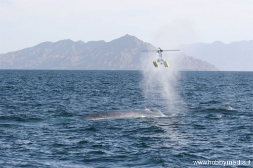 whale-helicopter