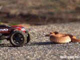 Video: Un automodello incontra un serpente a sonagli...