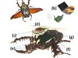 MEMS 2009 - Cyber Modellismo - Arrivano gli insetti radiocomandati